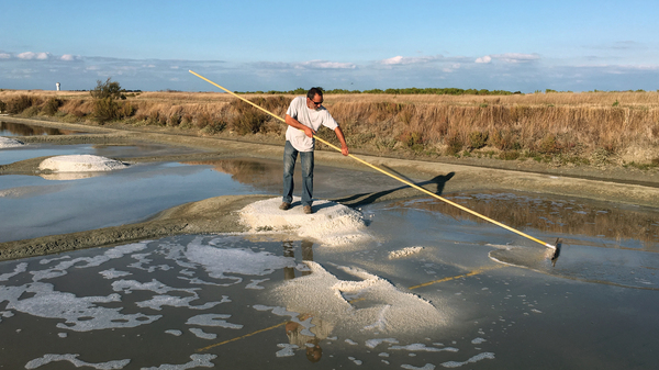 Hervé Zarka uses a tool called a simoussi to rake up salt in his marshland on the island of Noirmoutier in France. He says there are many minerals in natural sea salt, such as magnesium and potassium, that aren