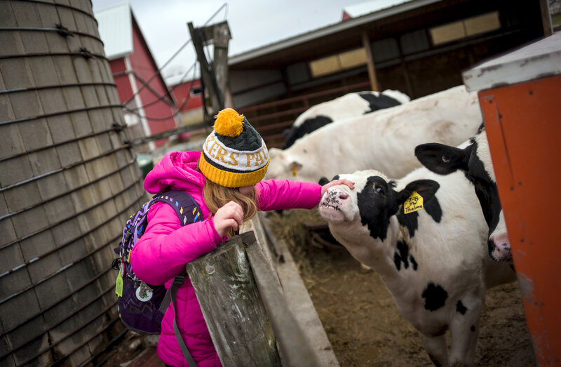For 4-H Kids, Saying Goodbye To An Animal Can Be The Hardest