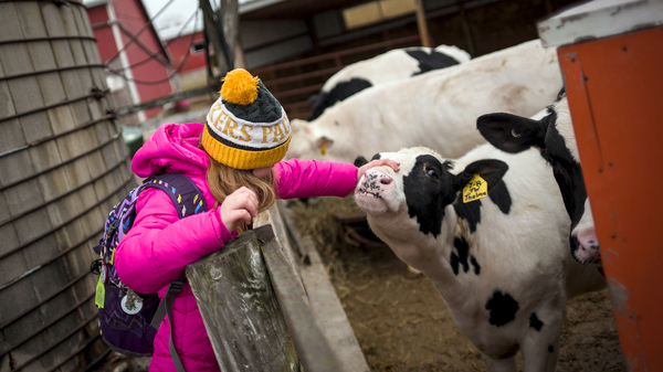 Not only are kids raising animals and learning the how-tos of vaccinations and record-keeping, 4-H