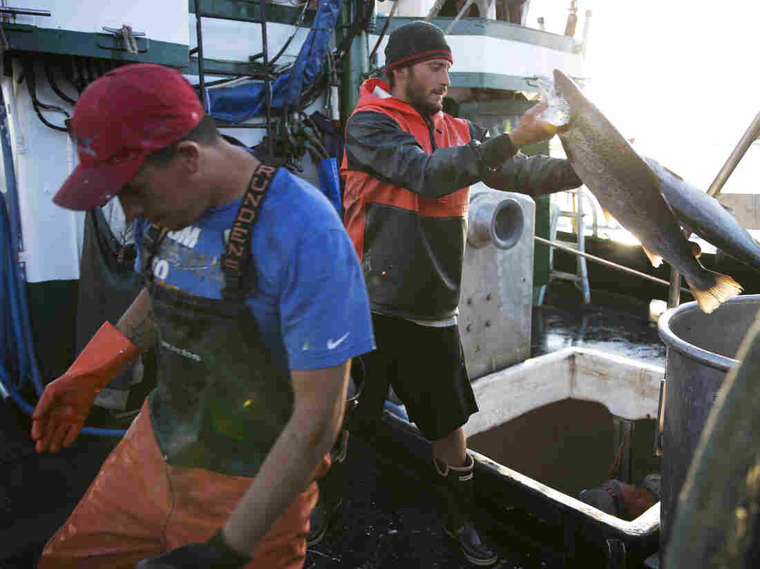 Washington conservation group sues Cooke Aquaculture