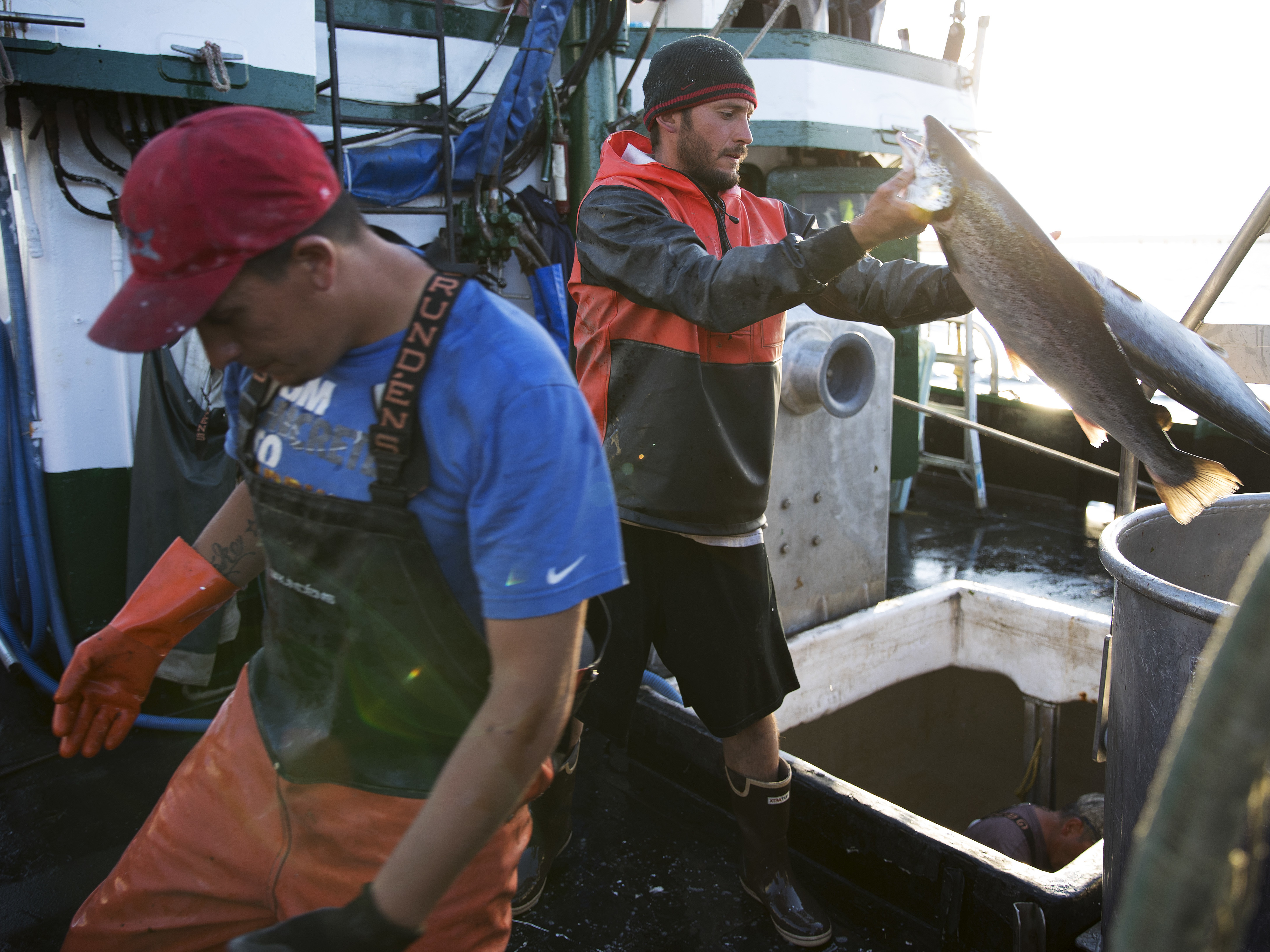Thousands of salmon on the run, escape possibly fueled by eclipse
