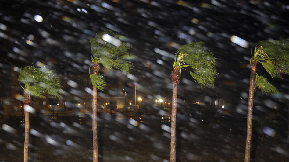 Rain is blown past palm trees as Hurricane Harvey makes landfall Friday in Corpus Christi,
