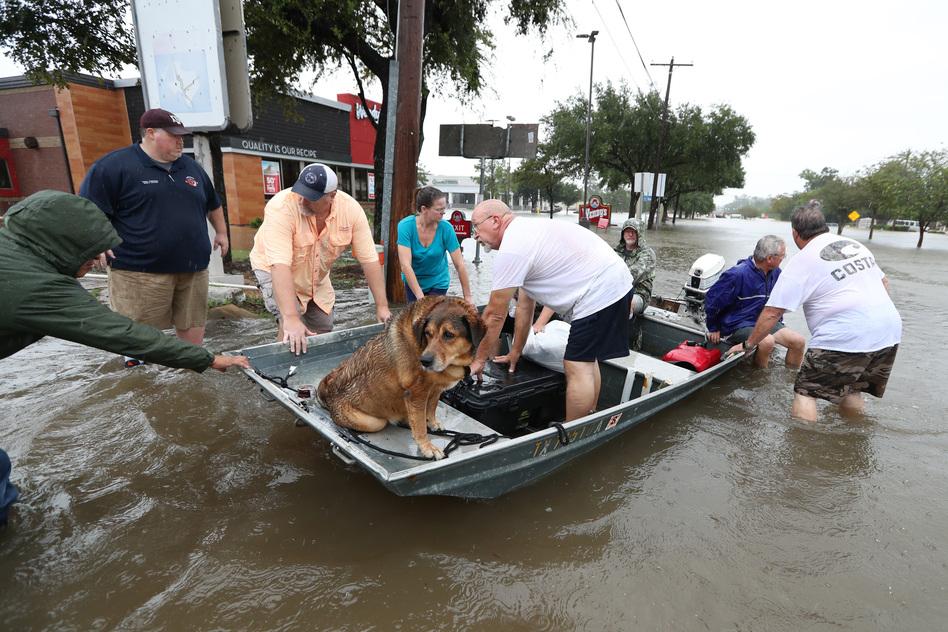 Dog Rescues In Corpus Christi