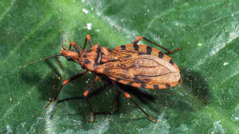 Drug For 'Neglected' Chagas Disease Gains FDA Approval Amid Price Worries