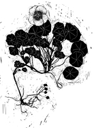 All of the figures in the book — like this nasturtium — are hand-drawn by Graham Judd, who says he used a minimalist woodblock-style to let readers' imaginations bring the illustrations to life.