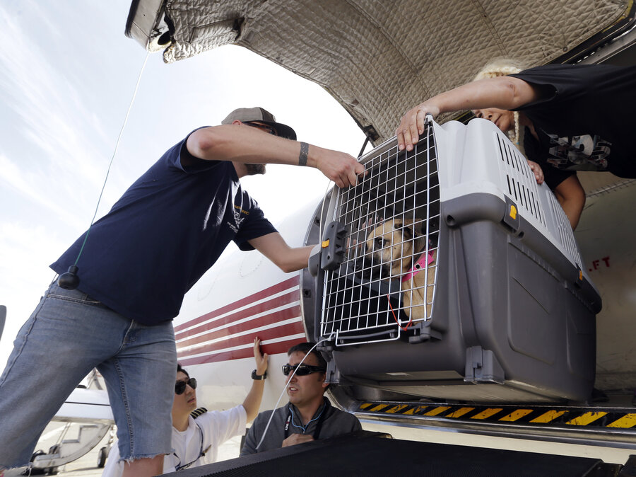 Image result for animals rescued harvey