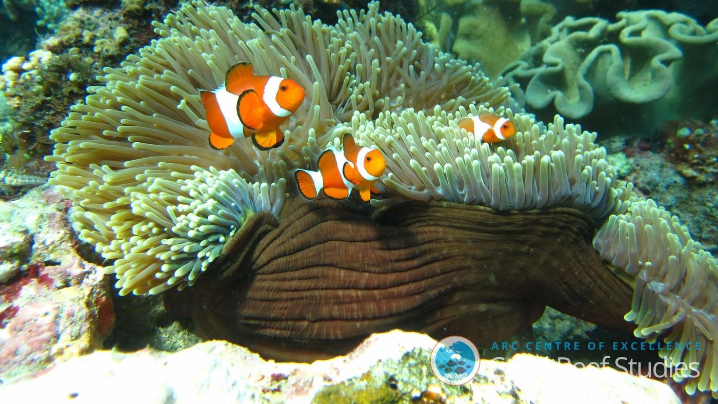 Coral Food Reviews