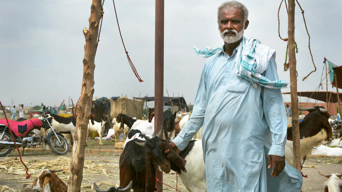 Eid Al-Adha Goats Cost More This Year Because Of Pakistan's