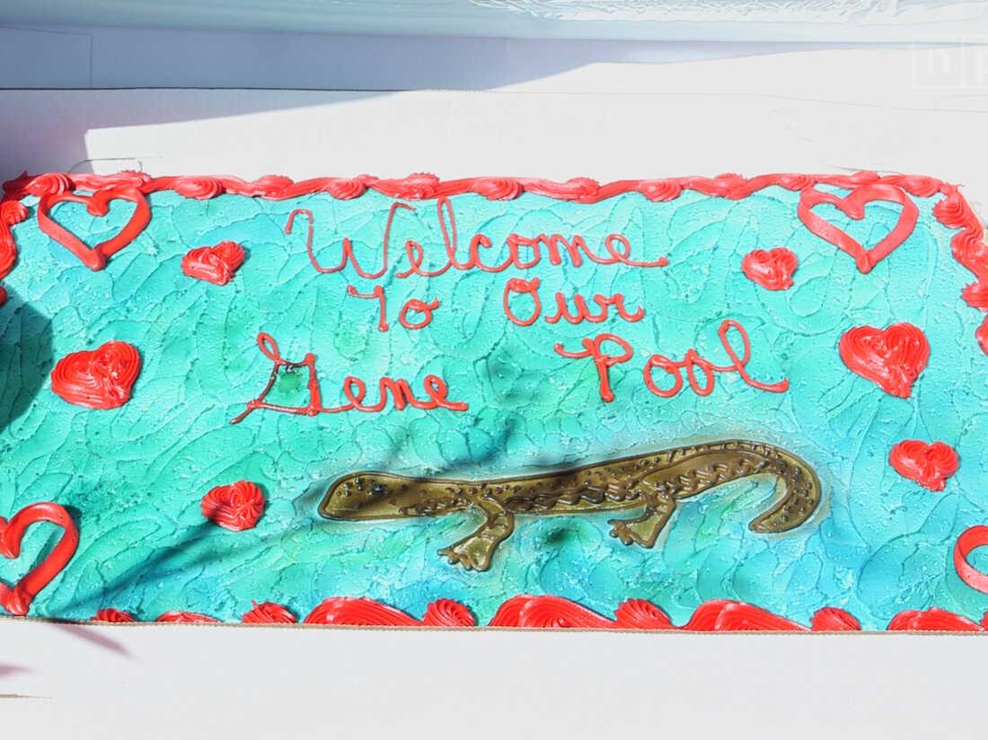 The celebratory cake.