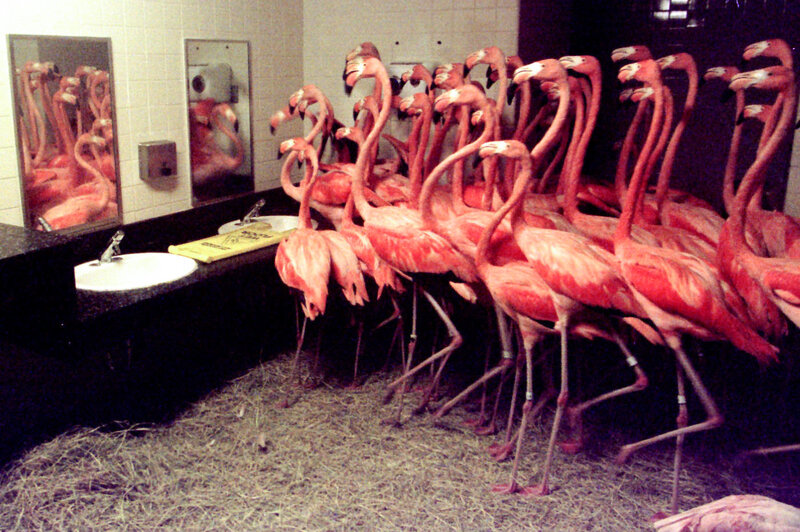 Flamingos In The Men S Room How Zoos And Aquariums Handle Hurricanes