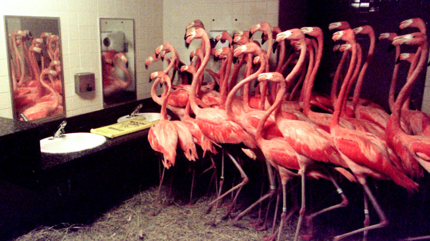 http://www.npr.org/2017/09/07/548981618/flamingos-in-the-men-s-room-how-zoos-and-aquariums-handle-hurricanes