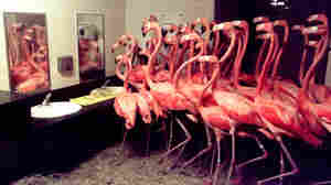 Flamingos In The Men's Room: How Zoos And Aquariums Handle Hurricanes