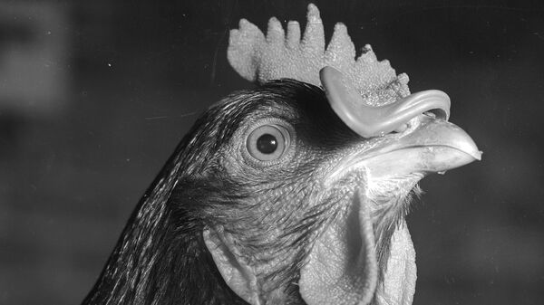 In the 1950s, the poultry industry began dunking birds in antibiotic baths. It was supposed to keep meat fresher and healthier. That