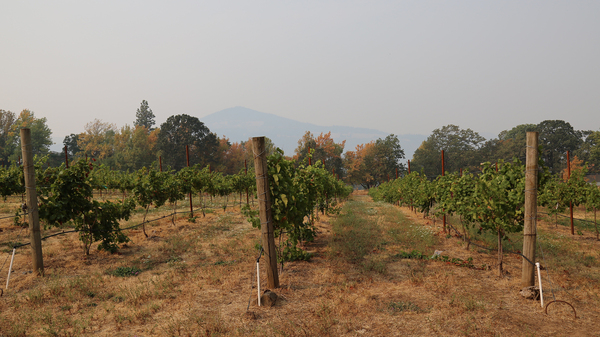 At the Cathedral Ridge Winery in Hood River, Ore., smoke has poured into the property and there are worries it could alter the taste of the grapes.