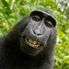 'Monkey Selfie' Lawsuit Ends With Settlement Between PETA, Photographer