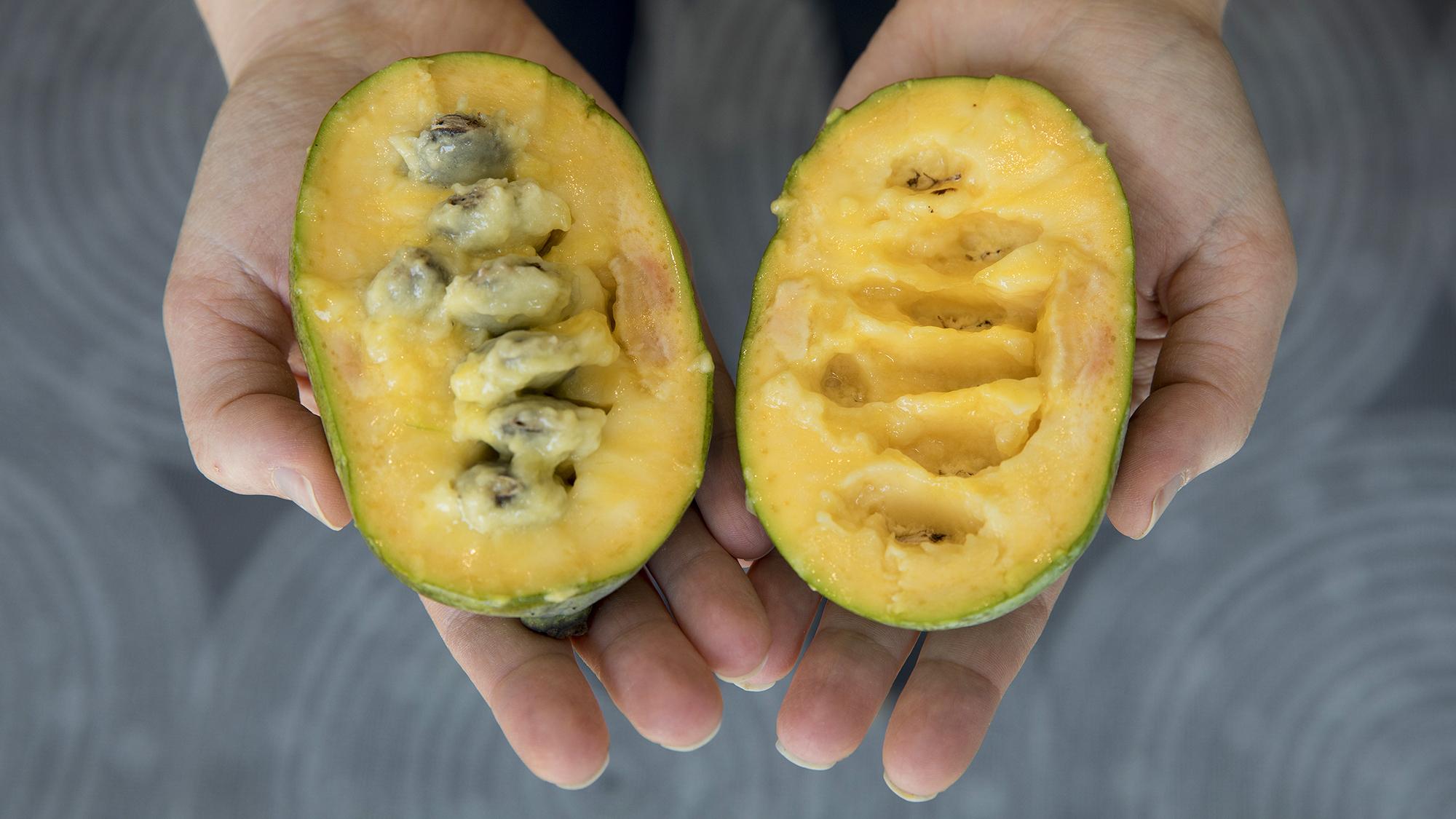 Papaya vs mango size