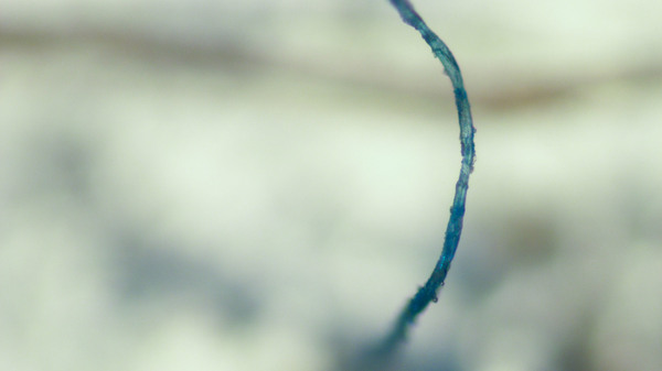 The majority of microplastic particles found in Dudas' samples consist of microscopic synthetic fibers.