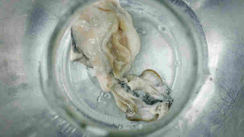 Guess What's Showing Up In Our Shellfish? One Word: Plastics