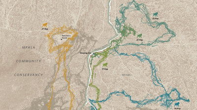 Yellowstone National Park : NPR