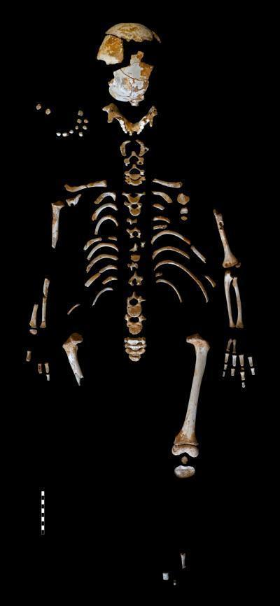 Study Suggests Neanderthals Enjoyed Long Childhoods