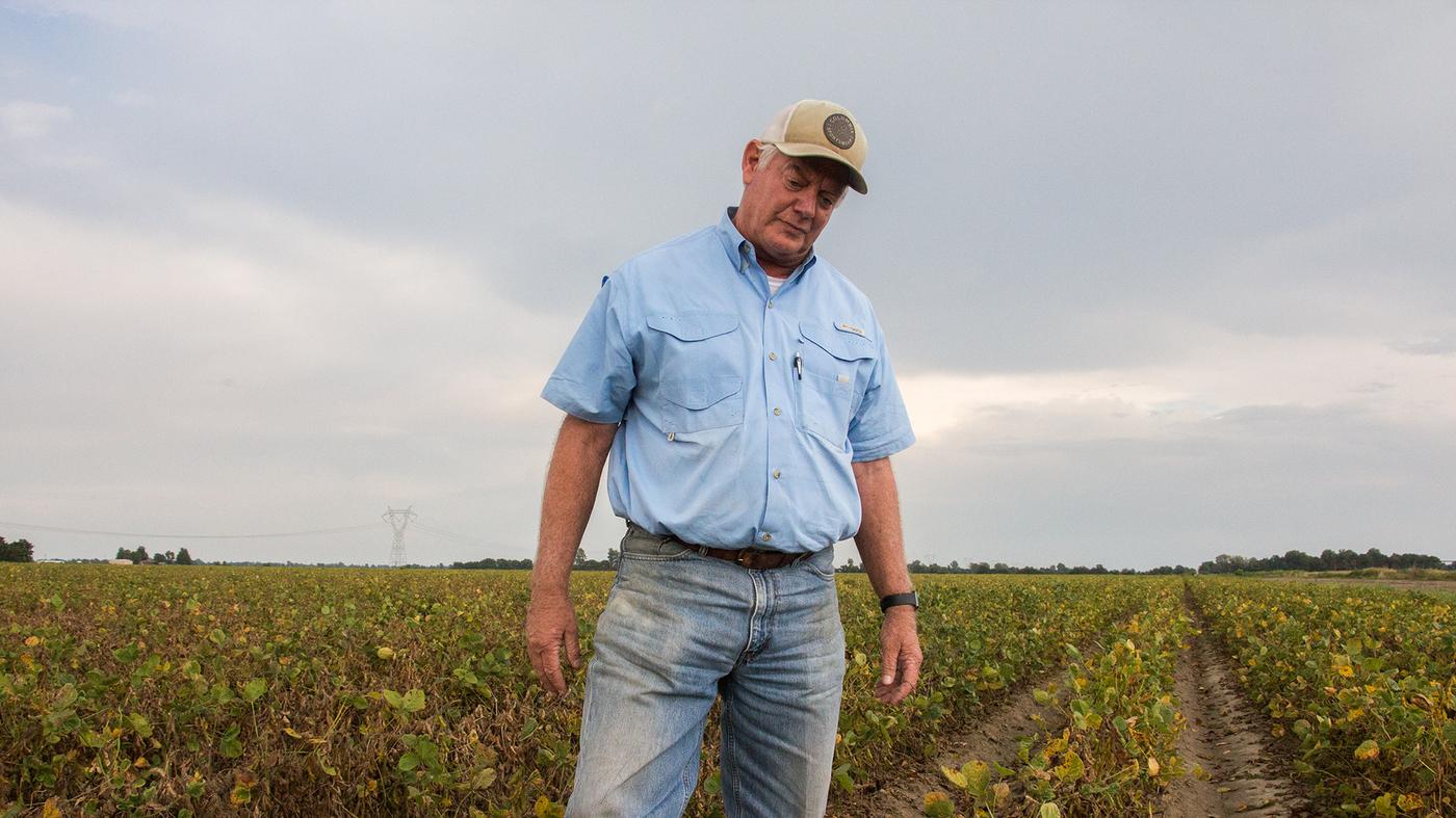 Arkansas Defies Monsanto, Moves To Ban Rogue Weedkiller