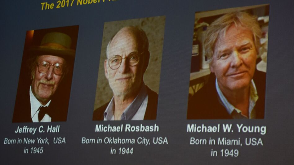 Winners of the 2017 Nobel Prize in Physiology or Medicine were shown on a screen at Monday's announcement. From left to right: Jeffrey C. Hall, Michael Rosbash and Michael W. Young. (Jonathan Nackstrand/AFP/Getty Images)