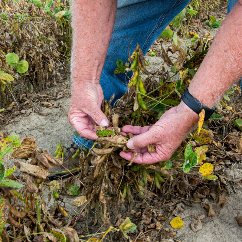 West Texas Vineyards Blasted By Herbicide Drift From Nearby