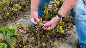 A Wayward Weedkiller Divides Farm Communities, Harms Wildlife
