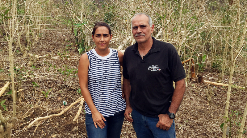 'This Was A Beautiful Place': Puerto Rico's Coffee Farms Devastated By Maria
