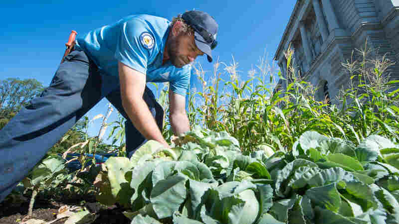 Historical Veggies Take Root In D.C. War Garden
