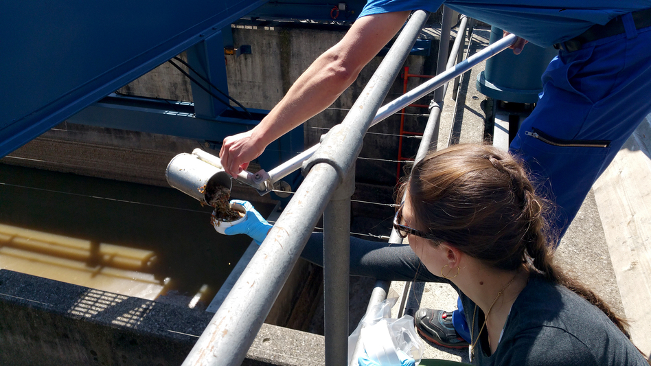 Researchers collect a sample at the Werdhölzli wastewater treatment plant in Zurich, as part of an Eawag research project exploring the concentration of various metals in treated wastewater. (Elke Suess/Eawag)