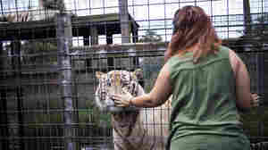 A Home To Big Cats And Raccoons Recovers After Hurricane Irma
