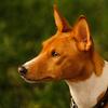 Τα σκυλιά και οι άνθρωποι έχουν περισσότερα κοινά από ό, τι νομίζετε