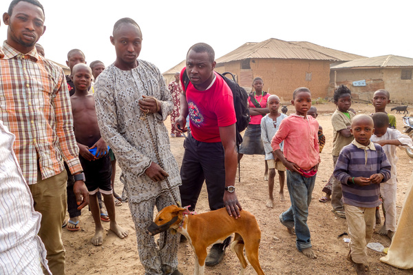 """""""Local dogs"""" in Nigeria actually have a unique pedigree. The dogs' ancestors likely came to the continent 14,000 years ago and have been largely isolated from European and Asian dogs ever since."""