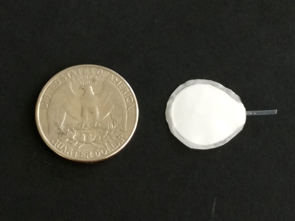 A coin-sized, semipermeable pouch is key to the proposed implant. The pouch allows cells inside to thrive and release insulin, the researchers say, while protecting the cells from immune rejection.