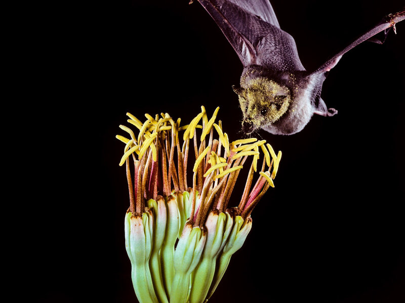 Bats And Tequila A Once Boo Tiful Relationship Cursed By Growing Demands