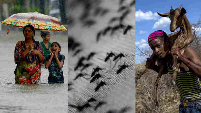 How Climate Change Is Already Affecting Health, Spreading Disease