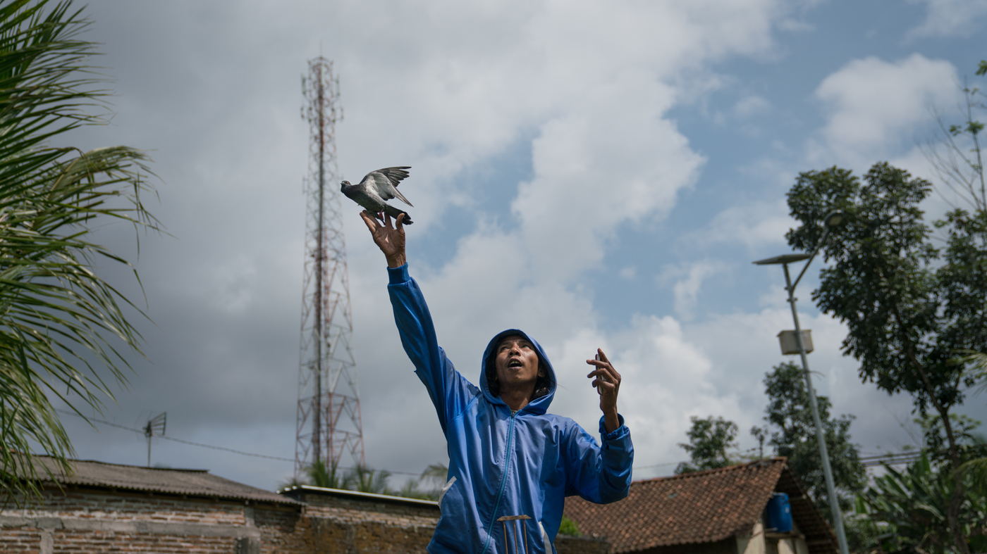 The Pigeon Racers Of Indonesia Parallels Npr Like Instagram 100 Real