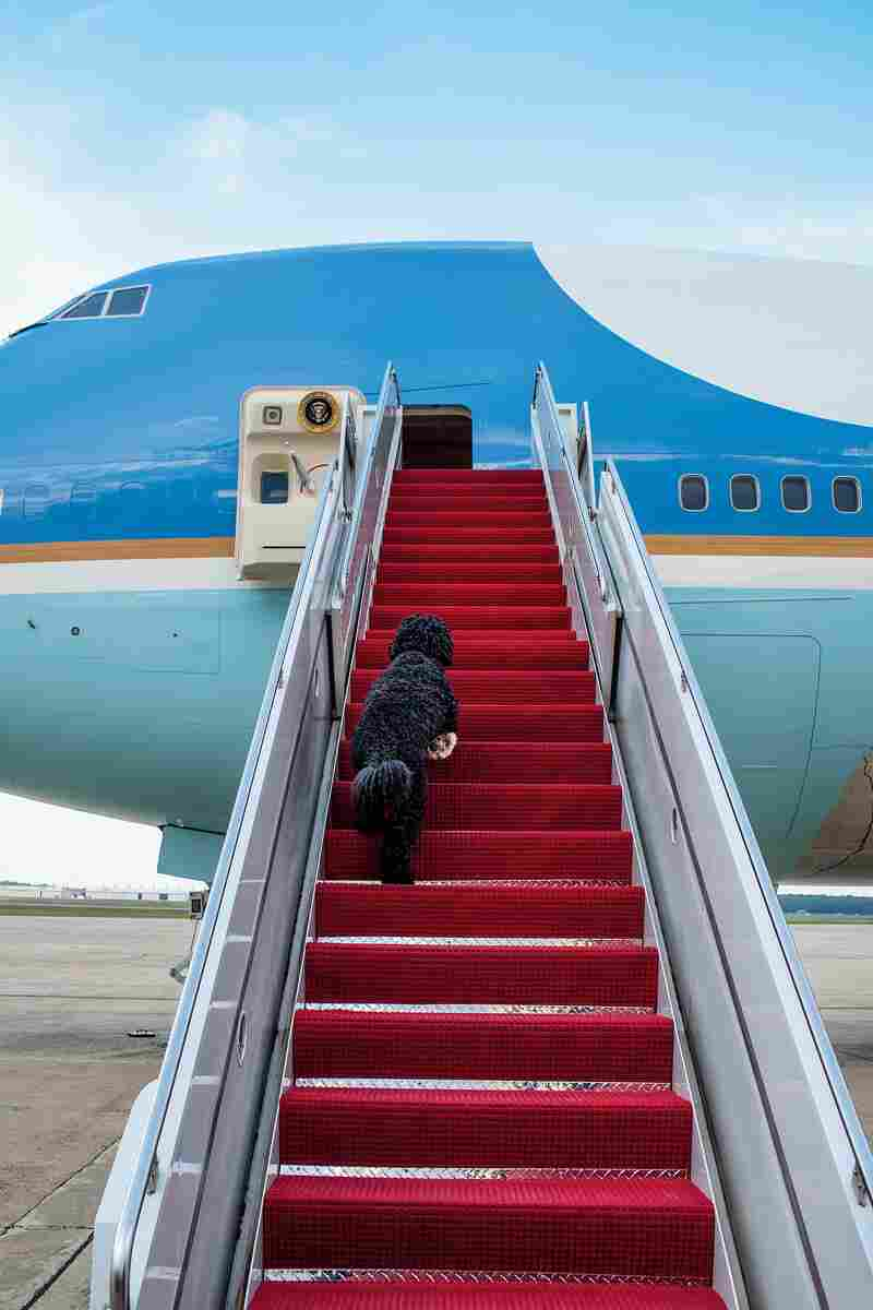 Bo, the first dog, boards Air Force One for a weekend trip to Chicago on May 27, 2010.