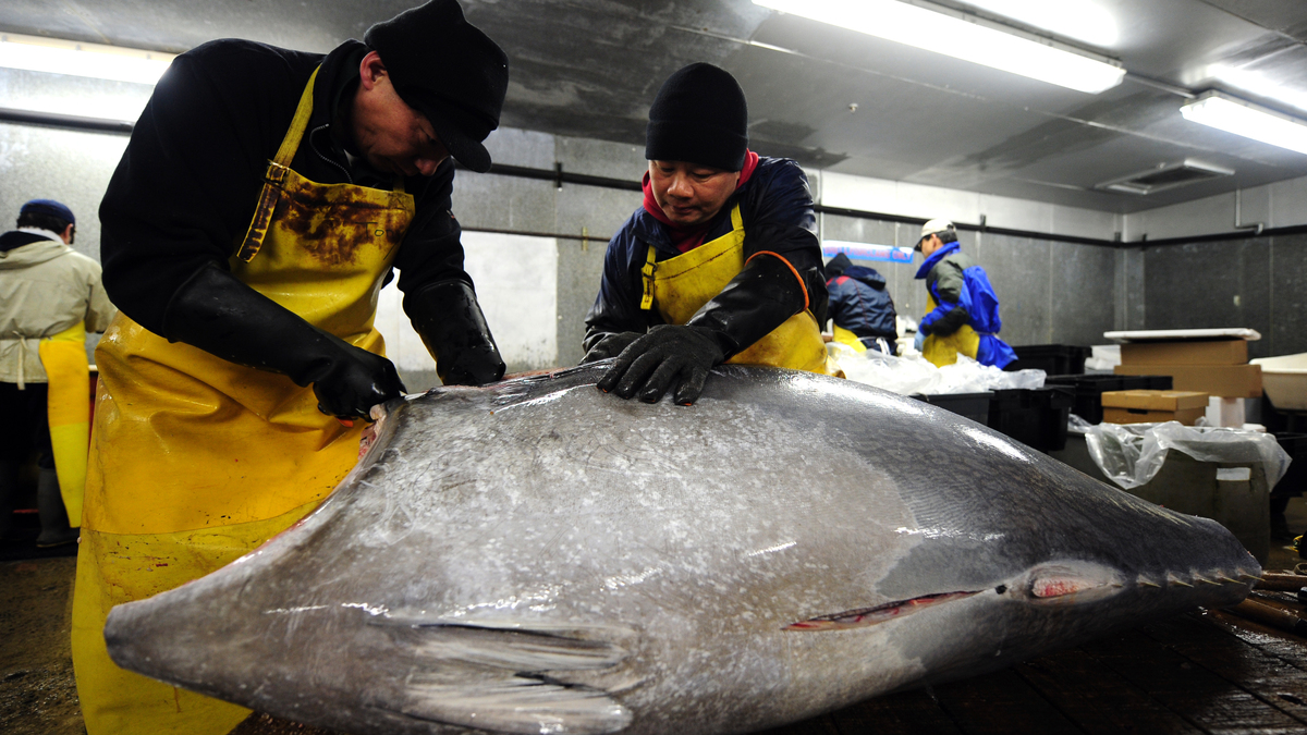 Is it time to catch the wave of rebounding atlantic for Best fish market nyc
