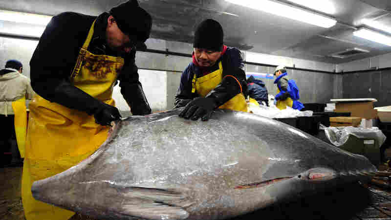 Is It Time To Catch The Wave Of Rebounding Atlantic Bluefin Tuna?
