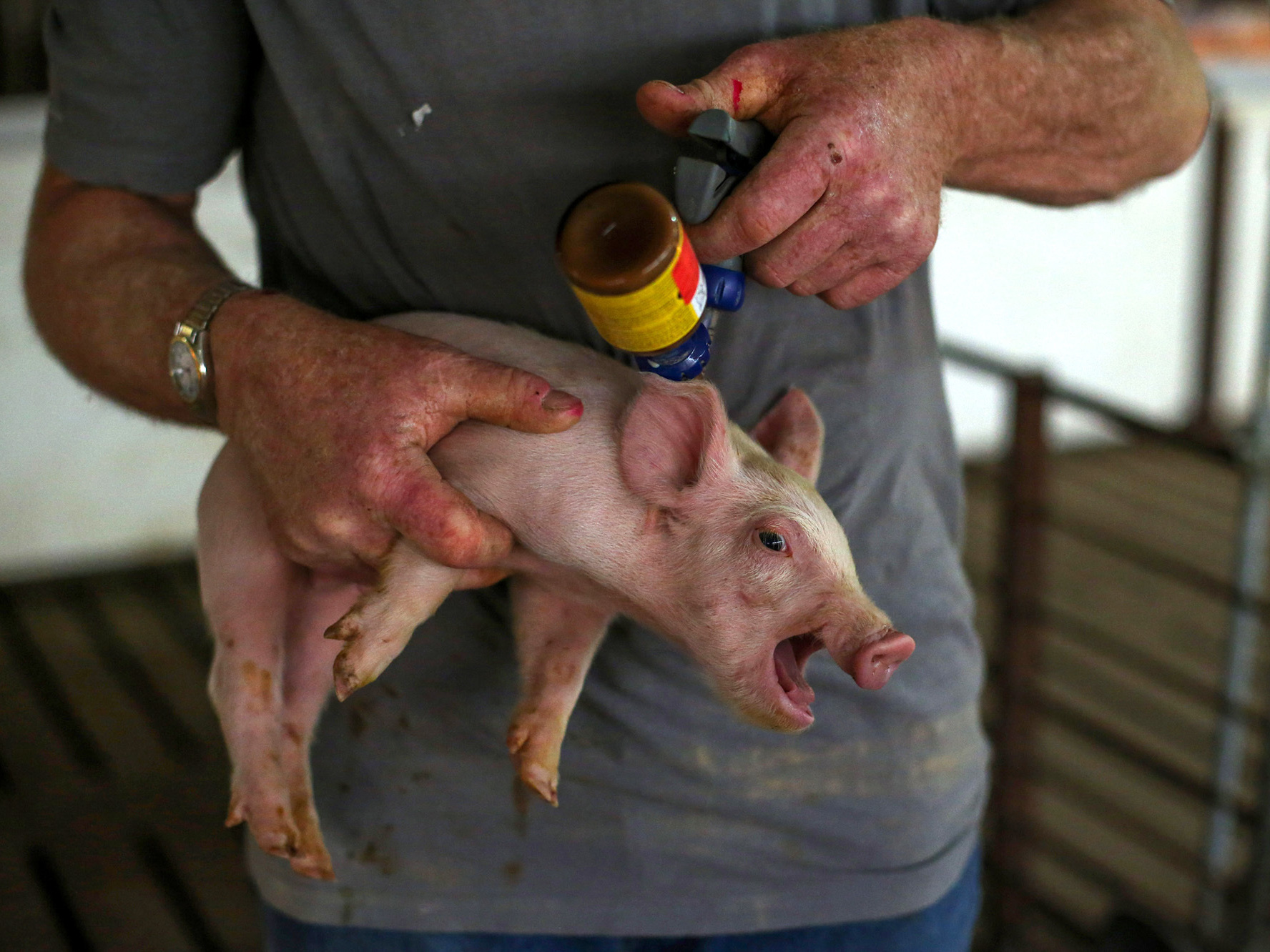 WHO To Farmers: Stop Giving Your Animals So Many Antibiotics