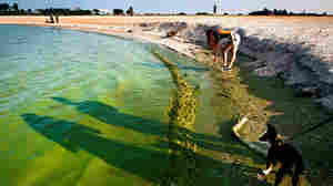 Algae Toxins In Drinking Water Sickened People In 2 Outbreaks