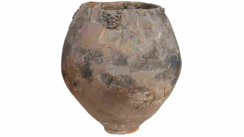 Georgian Jars Hold 8,000-Year-Old Winemaking Clues