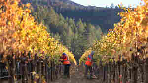 After Fires, California Wine Country Wants Tourists Back