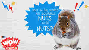 That's NUTS!