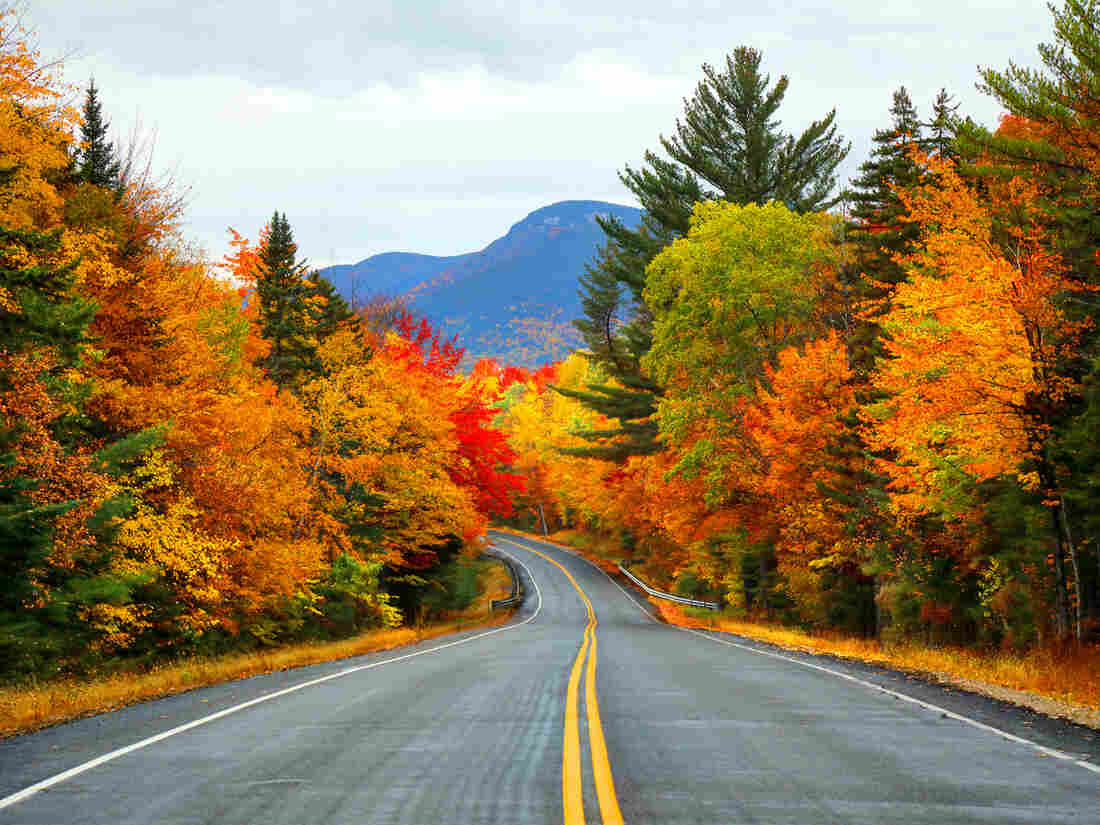 Fall colors as seen in the White Mountains of New Hampshire.