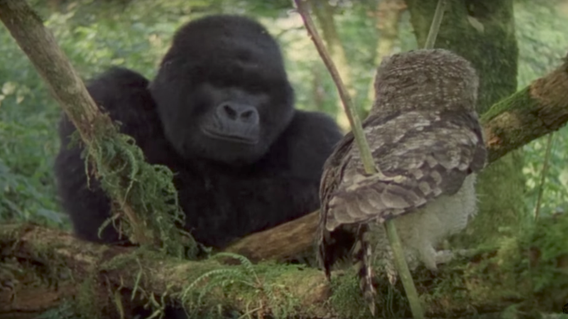 Video: An Interspecies Flying Lesson