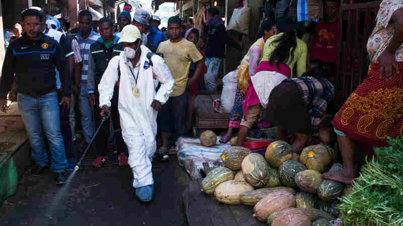 How Madagascar Took Control Of Its Plague Outbreak