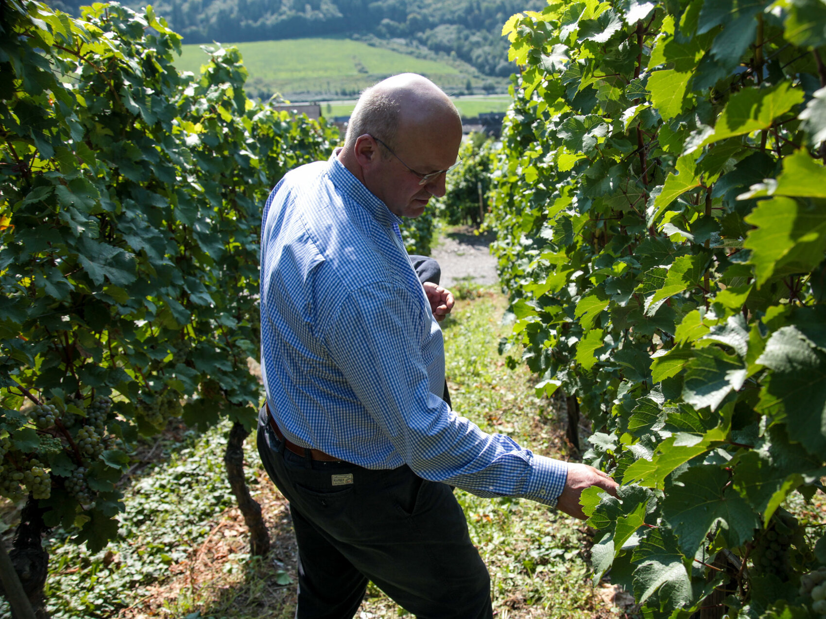 Climate Change Ripens Prospects For German Winemakers